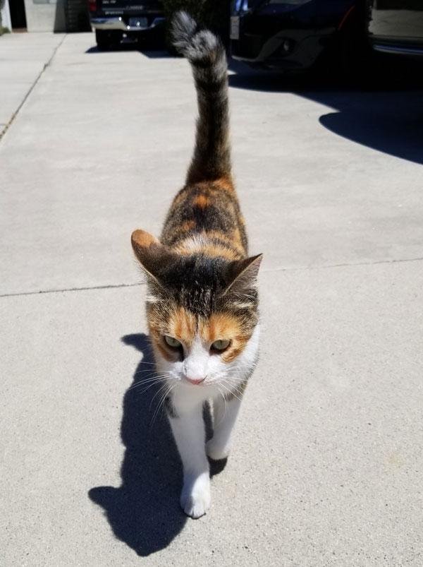 kit kat cat photo